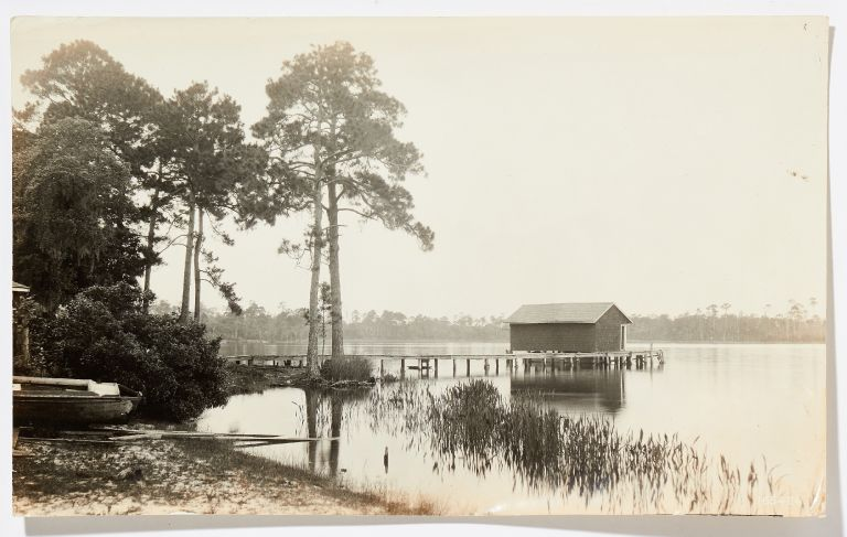 Photo album): Professional Nature Photography of Florida's National Forests in 1920